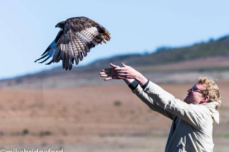 Releasing a raptor in South Africa