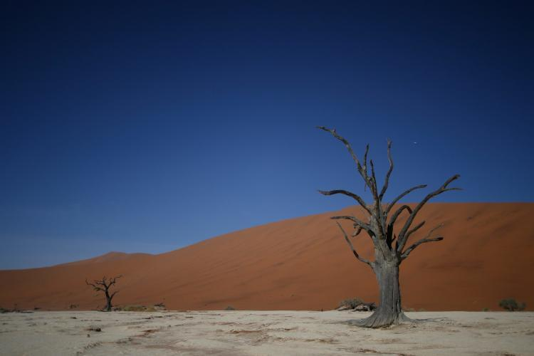 Volunteer visit to dead vlei in Sossusvlei in Namibia on day off