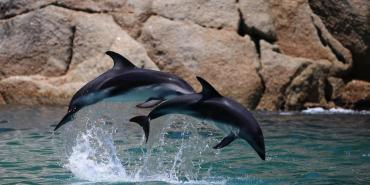 Dolphin research in Cape Town