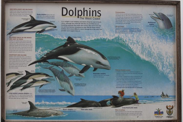 Dolphin sign at project in Namibia