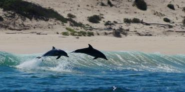 Volunteers witness dolphins leaping through waves in South Africa