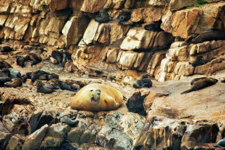 Volunteers research seals in South Africa