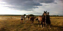 Equine volunteer programme in Namibia