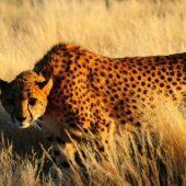 Wildlife Conservation & San Bushmen Community Project, Namibia