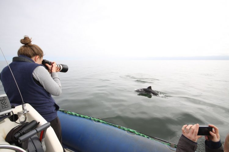 Intern taking photos of dolphins