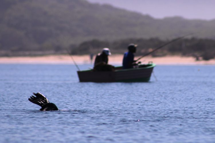 Interns researching whales in South Africa