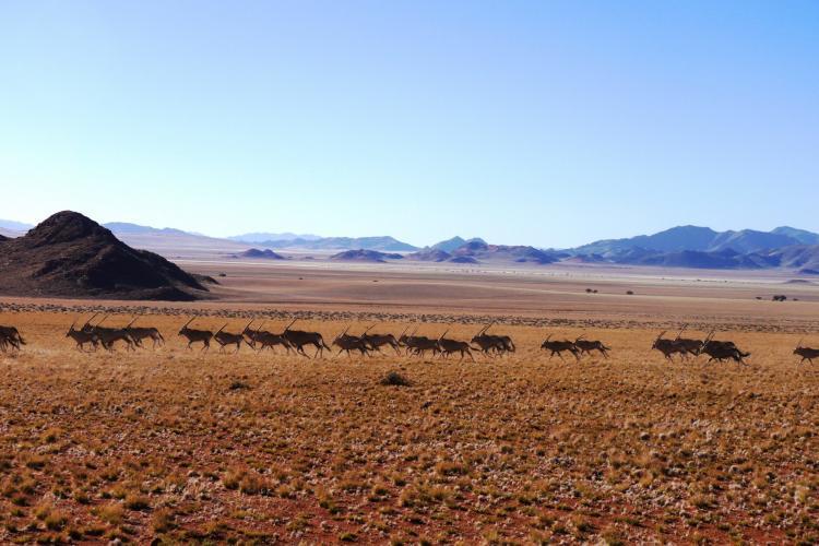 Desert landscape in Namibia