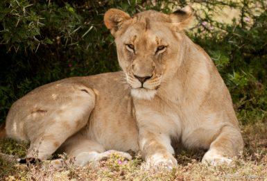alttagShamwari Game Reserve | Big Five Wildlife Volunteer | Working Abroad