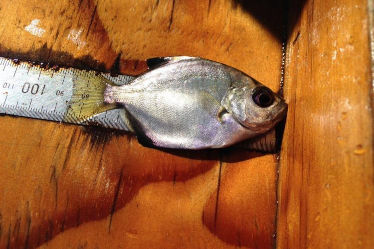 Fish sampling at Nature's Valley