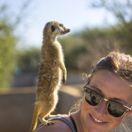 Rescued meerkats at Wildlife Sanctuary in Namibia