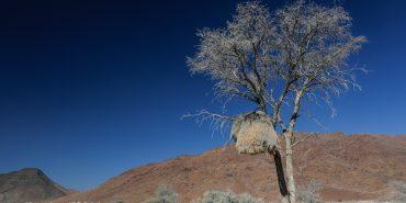 Tree in Namibian desert