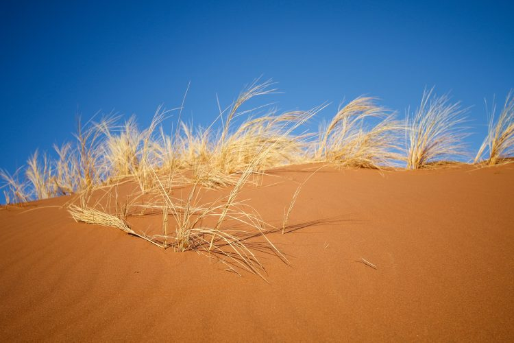 Blue sky and red sand in Namibia