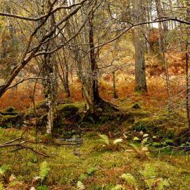 Autumn forest in Scotland
