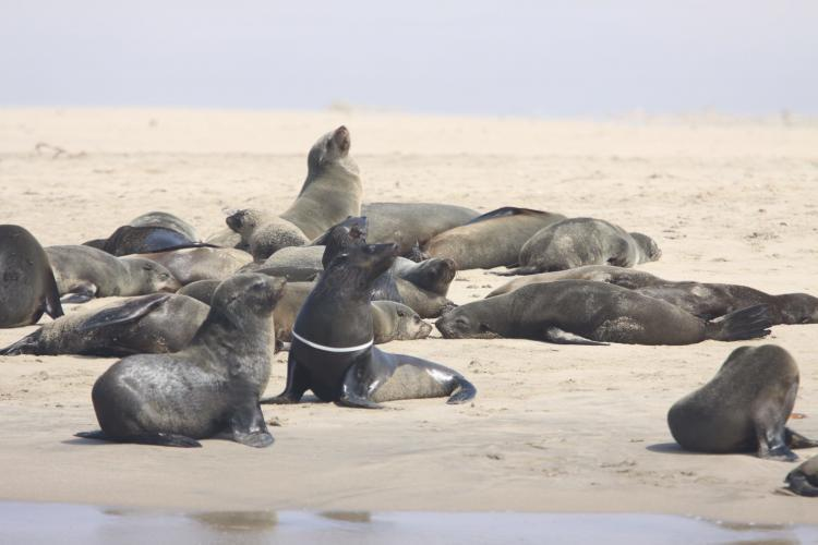 Seal colony in Namibia