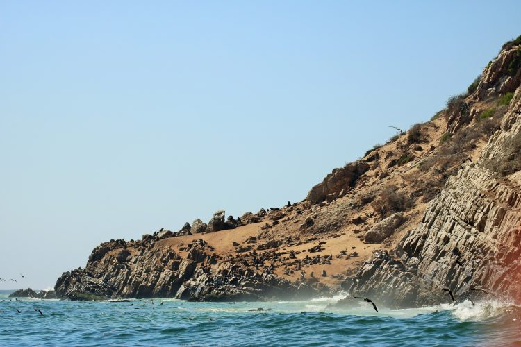 Plett coast where seals live in South Africa