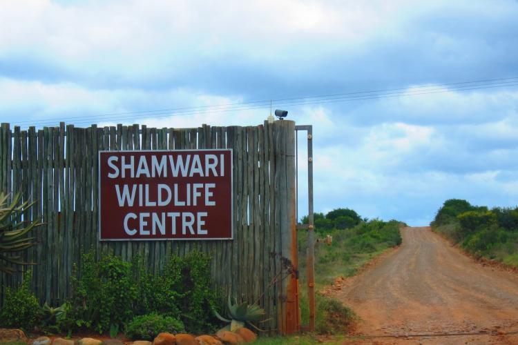 Volunteers can help at the Shamwari Wildlife Centre