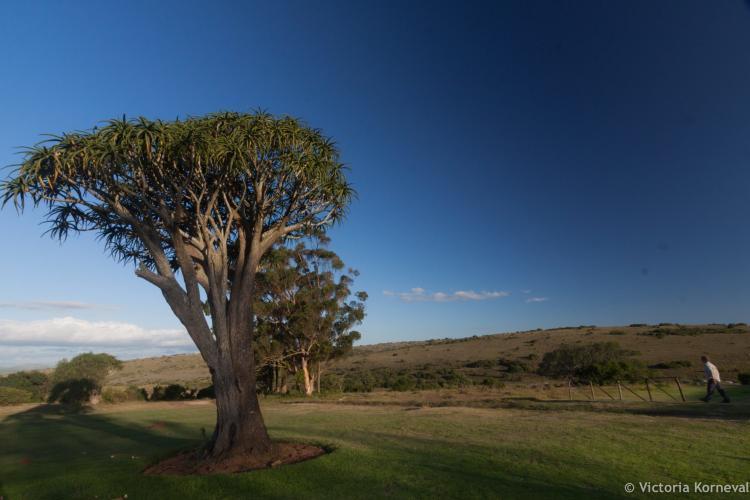 View of sky and tree at Shamwari