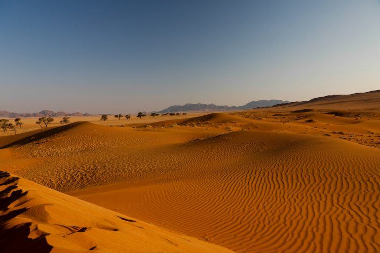 View over the red sand dunes in Kanaan in Namibia