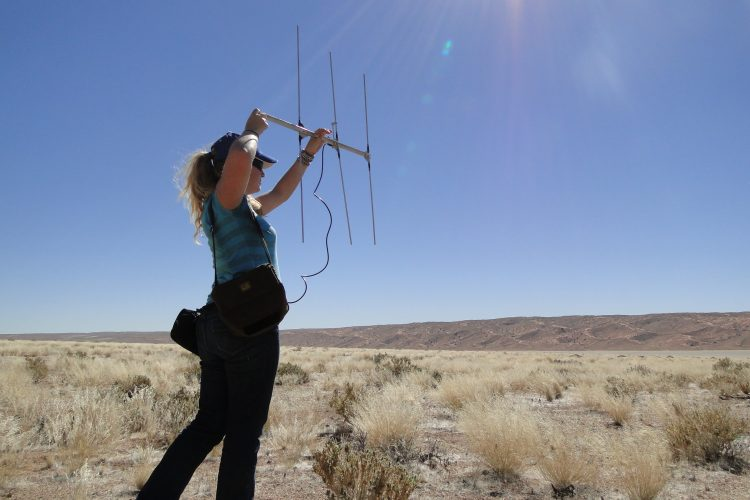 Volunteer tracking for carnivores in Namibia