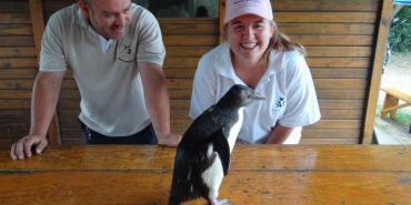 Volunteers with rescued penguin at Nature's Valley