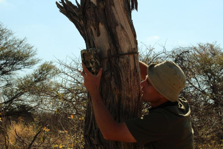 Volunteer setting camera trap in Namibia