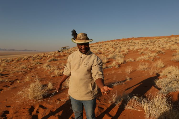 Volunteering with carnivore research in Namibia