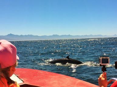 Volunteers whale watching in South Africa