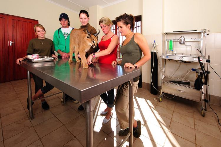 Volunteers assisting wildlife vet