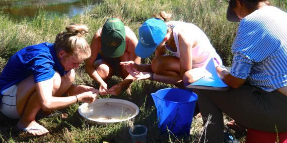 Volunteers working in the nature in South Africa