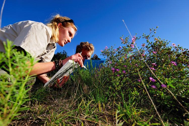 Researching plants and vegetation at Shamwari