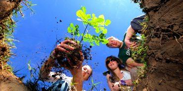 Volunteers planting a tree sapling at Shamwari