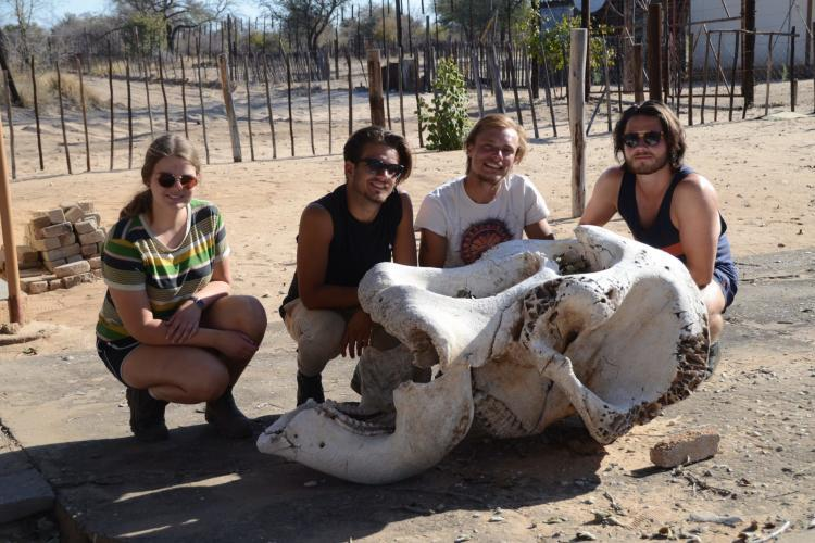 Volunteers next to elephant skull in Namibia