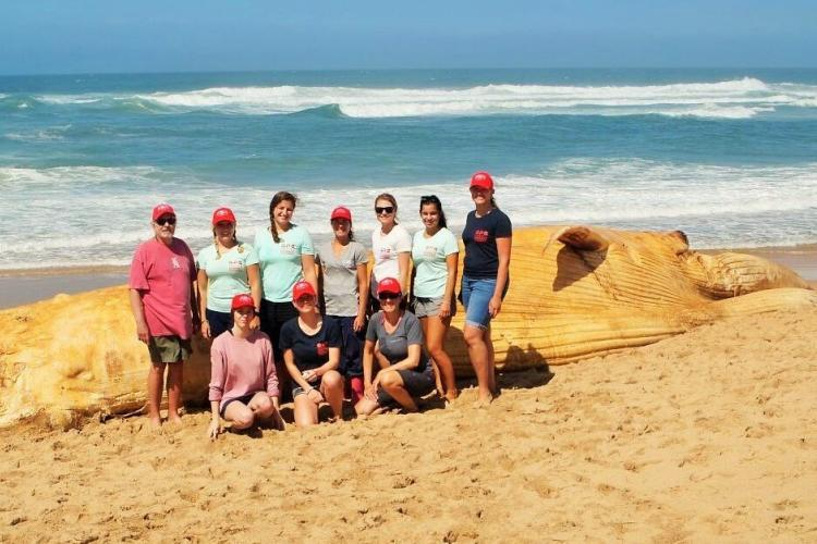 Volunteers on beach with whale carcass