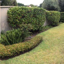 Volunteer house garden in South Africa