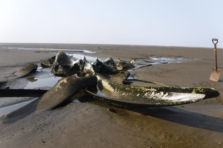Whale carcass discovered on beach in Cape Town