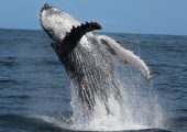 Sea Search Whale & Dolphin Research Programme, South Africa