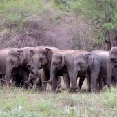 Volunteering in Sri Lanka – Protecting the Asian Elephant and Endangered Carnivores