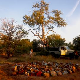 Volunteers setting up camera traps in Botswana