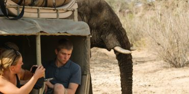 Elephant appearing behind volunteer sitting in truck