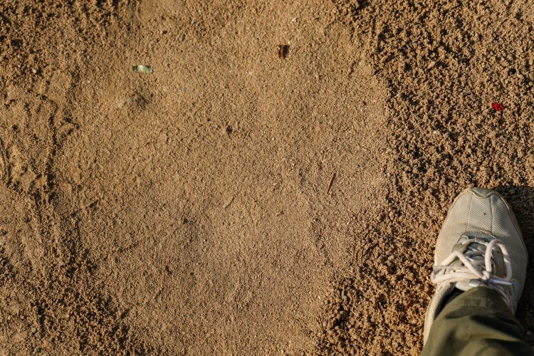 Elephant versus human footprint