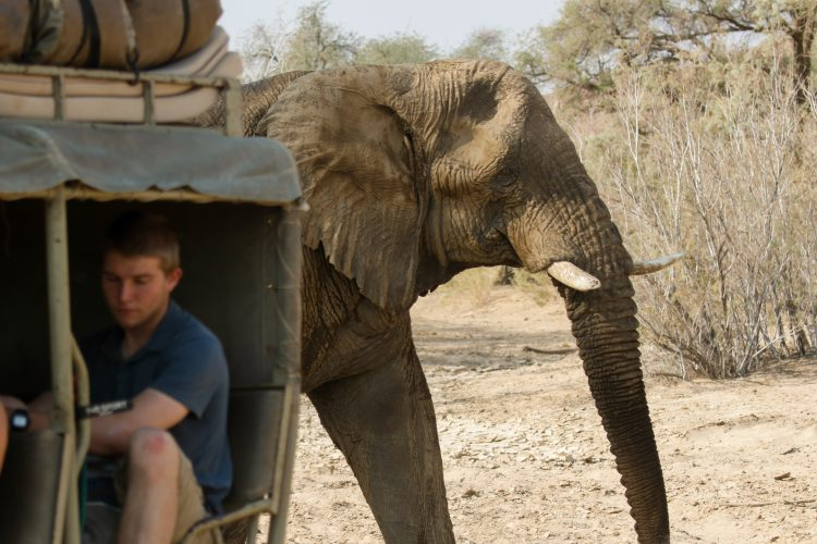 Elephant walking behind truck in Namibia