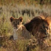 Species Conservation in South Africa: Protecting and preserving endangered wildlife and ecosystems