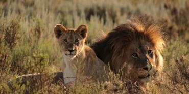 alttagSpecies Conservation in South Africa Protecting and preserving endangered wildlife and ecosystems