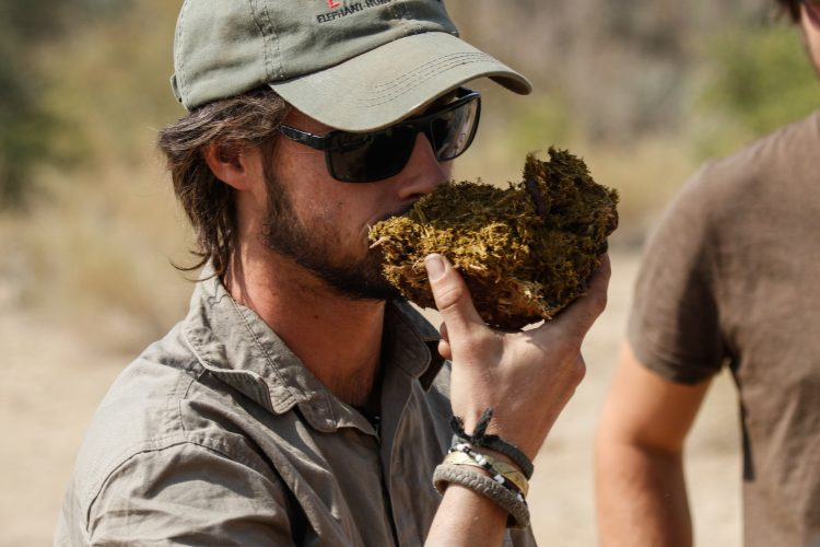 Smelling elephant dung to check for freshness