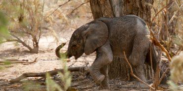 Main Threats facing elephants