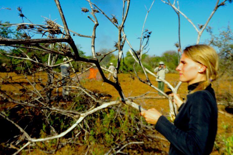 Volunteers in the bush in Botswana