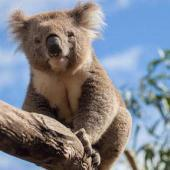 Voluntary Work in Australia – Experience Nature Conservation Down Under