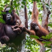 Volunteering in Indonesia: Nature and Wildlife Conservation in Borneo