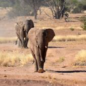 Volunteering in Namibia – Protection of Namibia's Desert Elephants