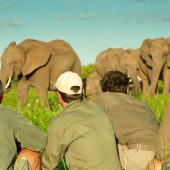 Safari Guide – Your Adventure in Kenya or Botswana/South Africa